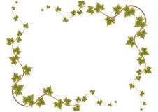 вектор листьев рамки зеленый Стоковая Фотография