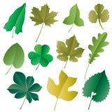 вектор листьев Стоковое Изображение