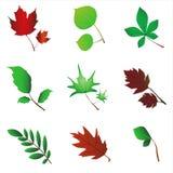 вектор листьев Стоковое Изображение RF