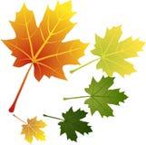вектор листьев иллюстрация вектора