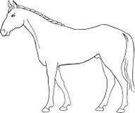 вектор лошади Стоковые Изображения