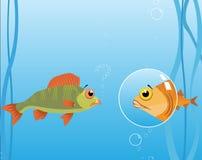 вектор моря рыб Стоковое Изображение RF