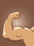 вектор мышцы иллюстрации Стоковая Фотография