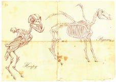 Вектор нарисованный рукой: Гарпия, Пегас Стоковое Изображение RF