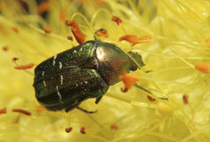 вектор насекомых цветков элементов конструкции Стоковые Изображения RF