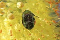 вектор насекомых цветков элементов конструкции Стоковые Фото