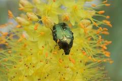 вектор насекомых цветков элементов конструкции Стоковые Изображения