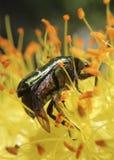 вектор насекомых цветков элементов конструкции Стоковая Фотография RF