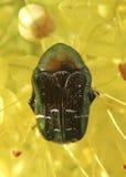 вектор насекомых цветков элементов конструкции Стоковые Фотографии RF