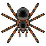 Вектор паука тарантула искусства пиксела детальный Бесплатная Иллюстрация