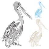 Вектор пеликана нарисованный вручную Стоковая Фотография RF