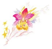вектор пинка орхидеи иллюстрации Стоковые Изображения