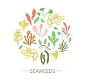 Вектор покрасил набор морских водорослей обрамленных в круге иллюстрация штока