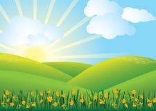 вектор поля daffodil Стоковая Фотография