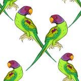 Вектор попугая безшовного попугая картины индийского окружённого ozherelovy Стоковые Фотографии RF