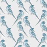Вектор попугая безшовного попугая картины индийского окружённого ozherelovy Стоковые Фото