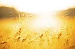вектор природы предпосылки красивейший сделанный Стоковые Фотографии RF