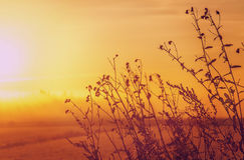 вектор природы предпосылки красивейший сделанный Стоковое фото RF