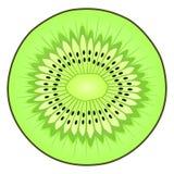 Вектор плодоовощ кивиа Стоковые Фото