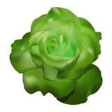 Вектор розы зеленого цвета Иллюстрация вектора
