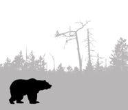 вектор силуэта медведя иллюстрация вектора