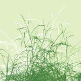 вектор силуэта травы Стоковые Фото