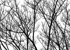 Вектор силуэта хворостин дерева Стоковая Фотография RF