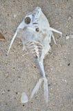 вектор скелета иллюстрации потехи рыб Стоковое Фото