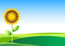 вектор солнцецвета иллюстрации Стоковые Фотографии RF