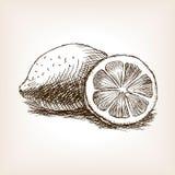 Вектор стиля эскиза плодоовощ лимона нарисованный рукой Стоковые Изображения