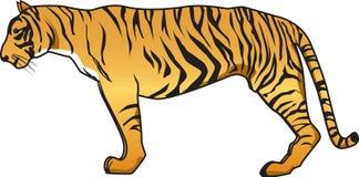 вектор тигра Стоковые Изображения