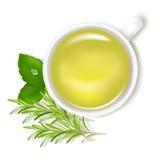 вектор травяного чая иллюстрация вектора