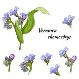Вектор установил нежных цветков на белой предпосылке Лекарственное растение nica ³ Verà нарисовано в чернилах для украшения иллюстрация вектора