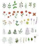Вектор установил покрашенных цветков, трав, заводов бесплатная иллюстрация