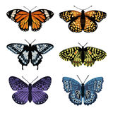 вектор установленный с бабочками Дизайн нарисованный рукой Стоковое Фото