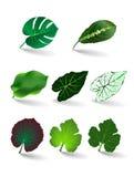 Вектор установленный листьями eps 10 бесплатная иллюстрация
