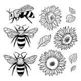 Вектор установленный с пчелами и солнцецветами иллюстратор иллюстрации руки чертежа угля щетки нарисованный как взгляд делает пас Стоковые Фото
