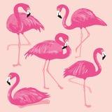 Вектор установленный с розовыми фламинго иллюстратор иллюстрации руки чертежа угля щетки нарисованный как взгляд делает пастель к Стоковое Изображение RF