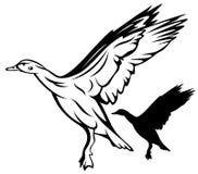 вектор утки Стоковое Изображение