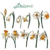 Вектор флористический бесплатная иллюстрация