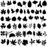 вектор флористических листьев Стоковое Изображение RF