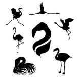 Вектор фламинго установленный Стоковые Фото
