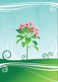 вектор цветка красотки Стоковые Фотографии RF