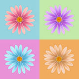 Вектор цветка маргаритки, красочный вектор маргаритки, вектор цветка Стоковое фото RF