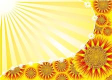 вектор цветка предпосылки Стоковое Фото