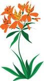 вектор цветка Стоковое Изображение