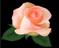 вектор чая красивейшей черноты предпосылки розовый Стоковая Фотография