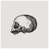 Вектор черепа Стоковые Изображения RF