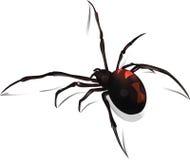 Вектор черной вдовы Стоковое Изображение RF
