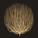 Вектор чертежа Tumbleweed бесплатная иллюстрация